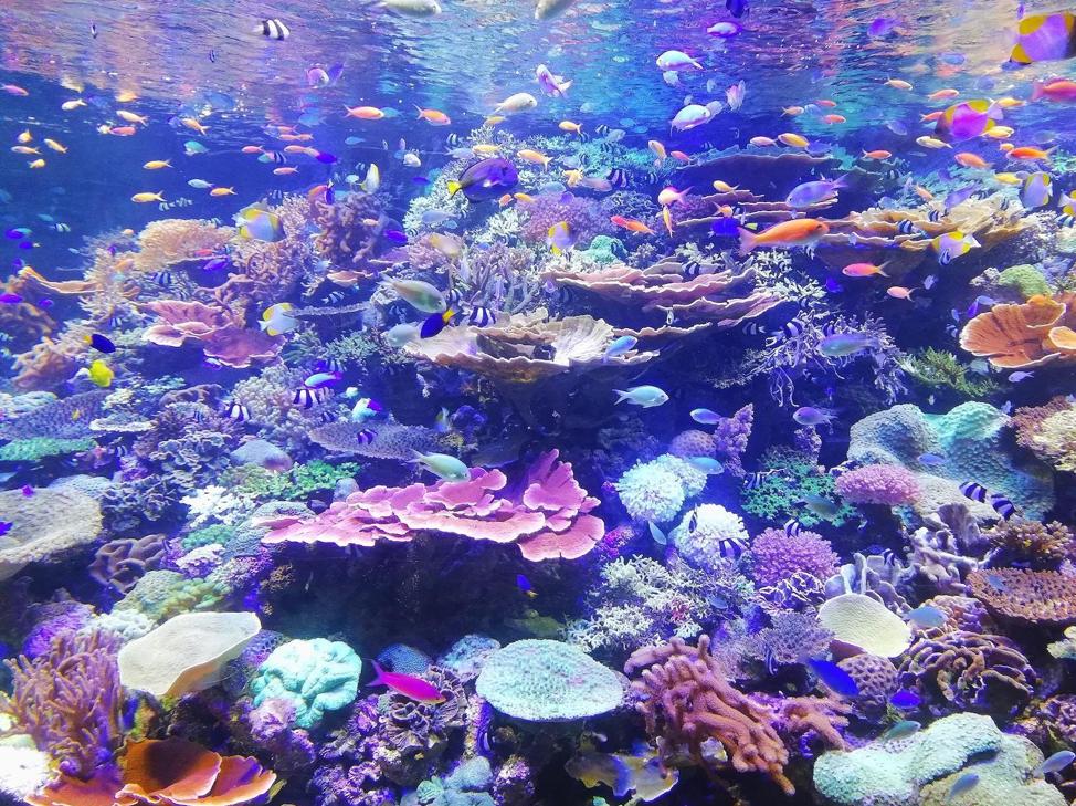 Figure 3 School of fish on corals. Photo by Sagar on Unsplash