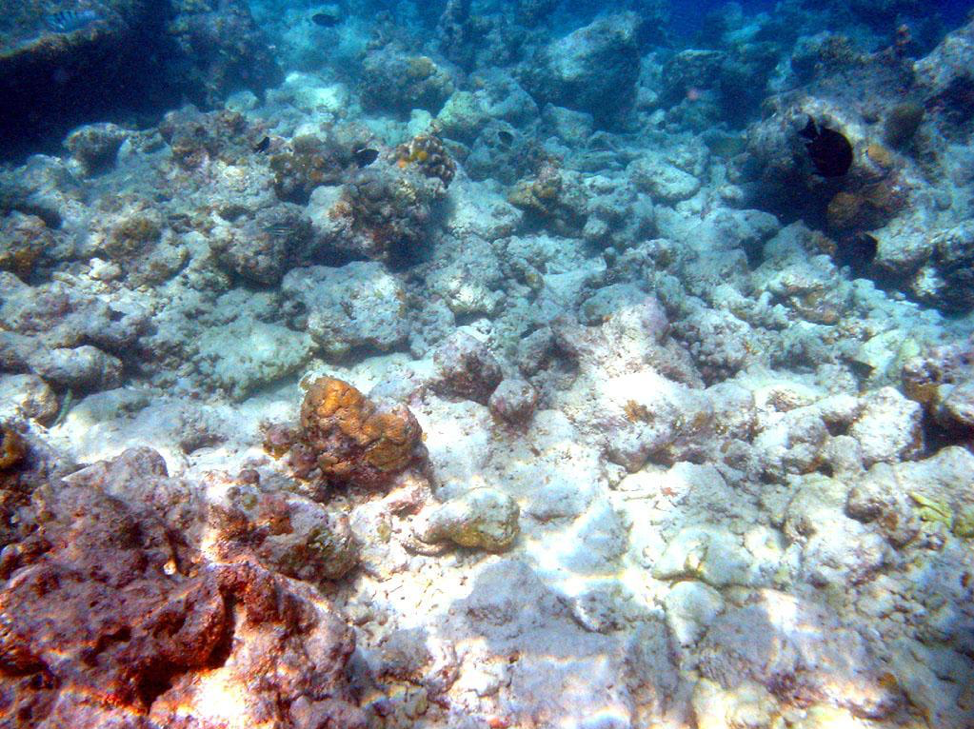 Figure 2 Bleached corals. Bruno de Giusti via Wikimedia Commons