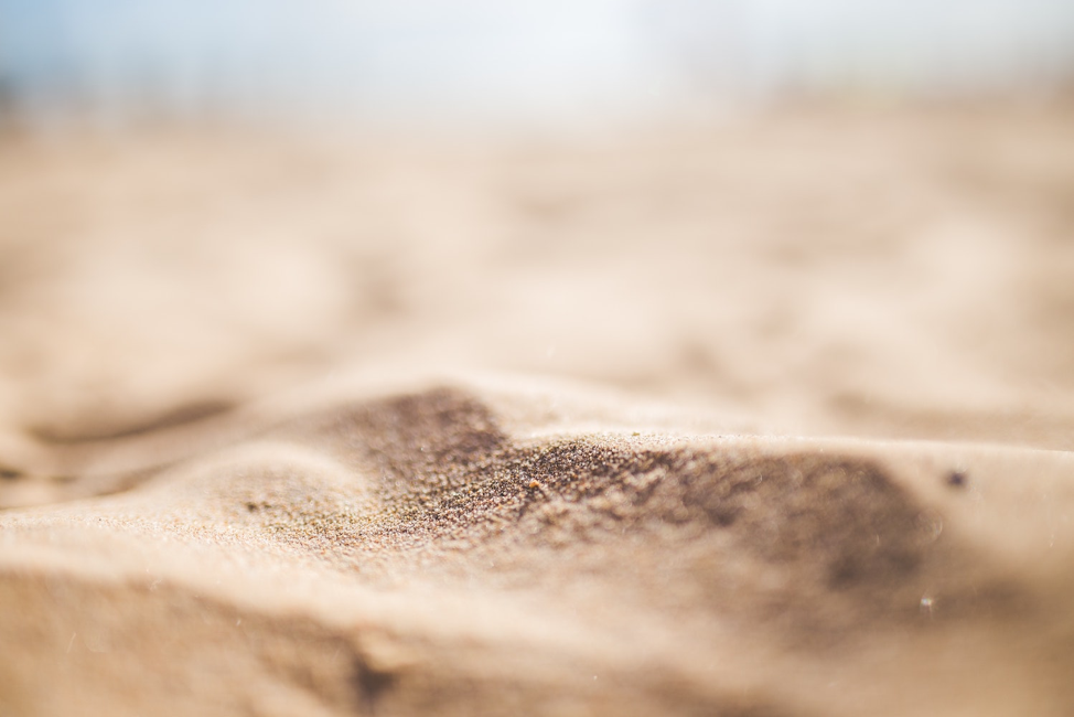 Figure 4  Sand  replaces soil without crypto.