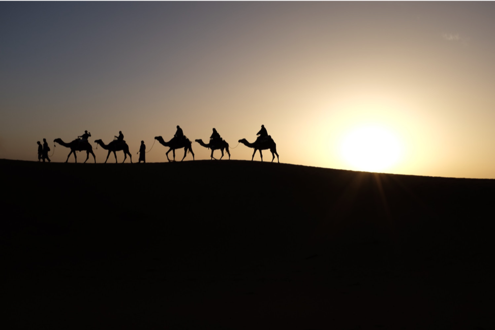 Figure 2 Camels in Merzouga, Morocco. Photo by Inbal Malca on Unsplash