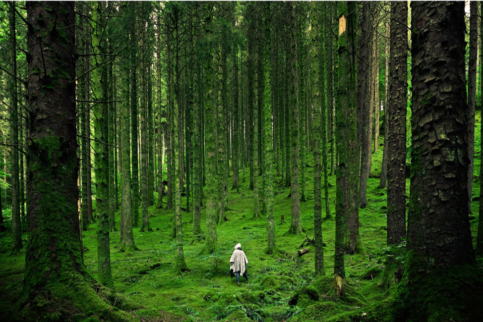 Figure 7. Forest in Inverness, Reino Unido. Photo by Luis Del Río Camacho on Unsplash