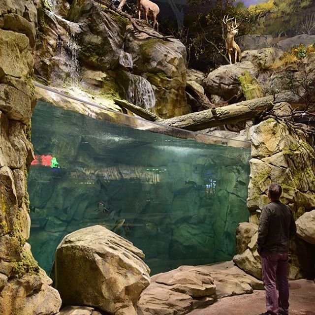 Intense Visual Merchandising by Us.. Rocky Mountain Trout Steam in store....... #naturalhabitats #aquaticdesign