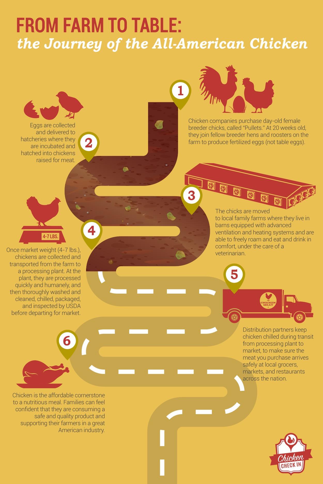 Infographic-Journey-of-All-American-Chicken-v4.jpg