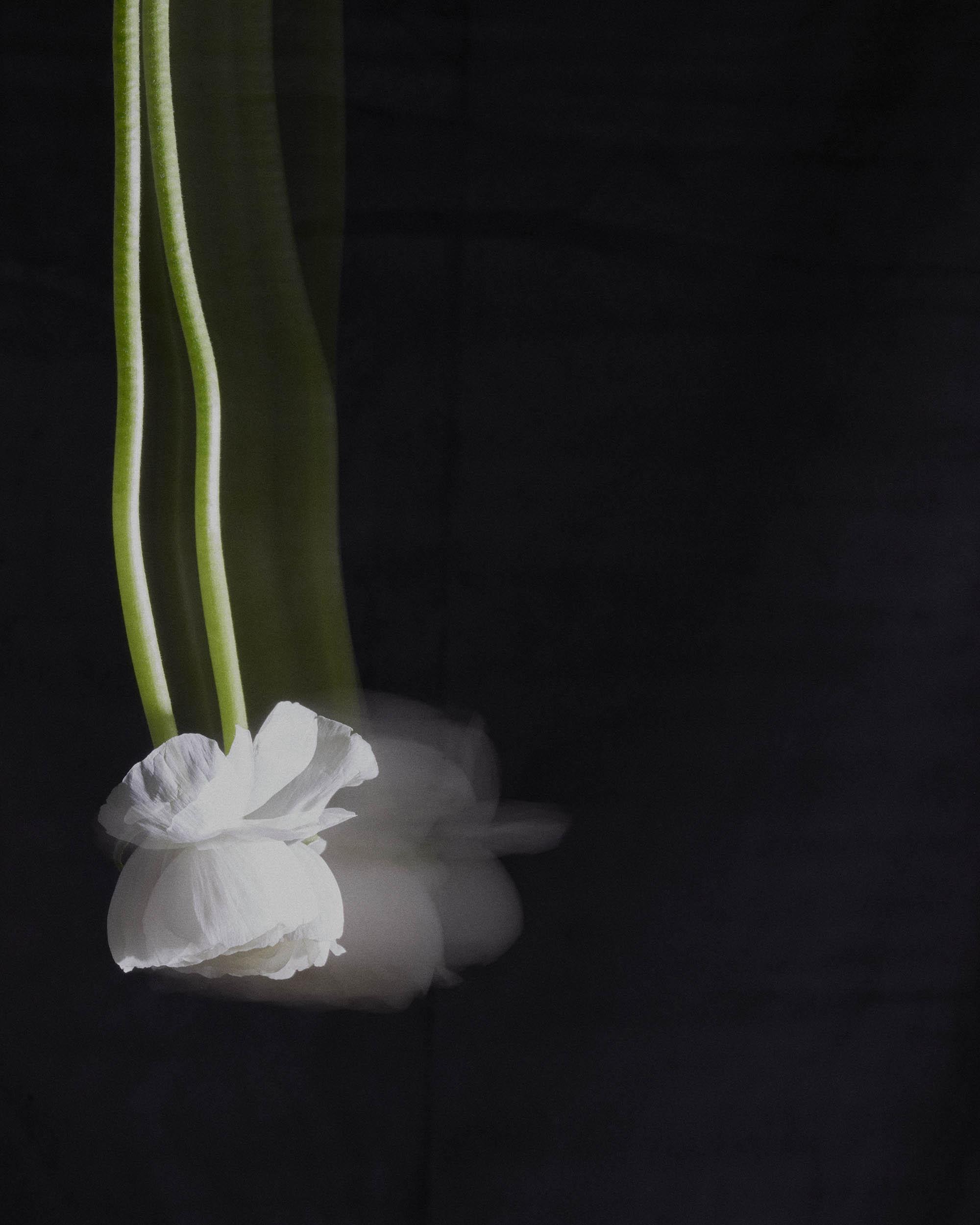 white flower_10x8_flat.jpg