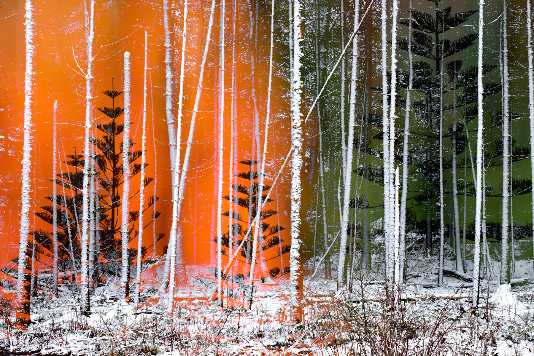 ORANGE+SNOW+TREES+ORANGE_1.jpg