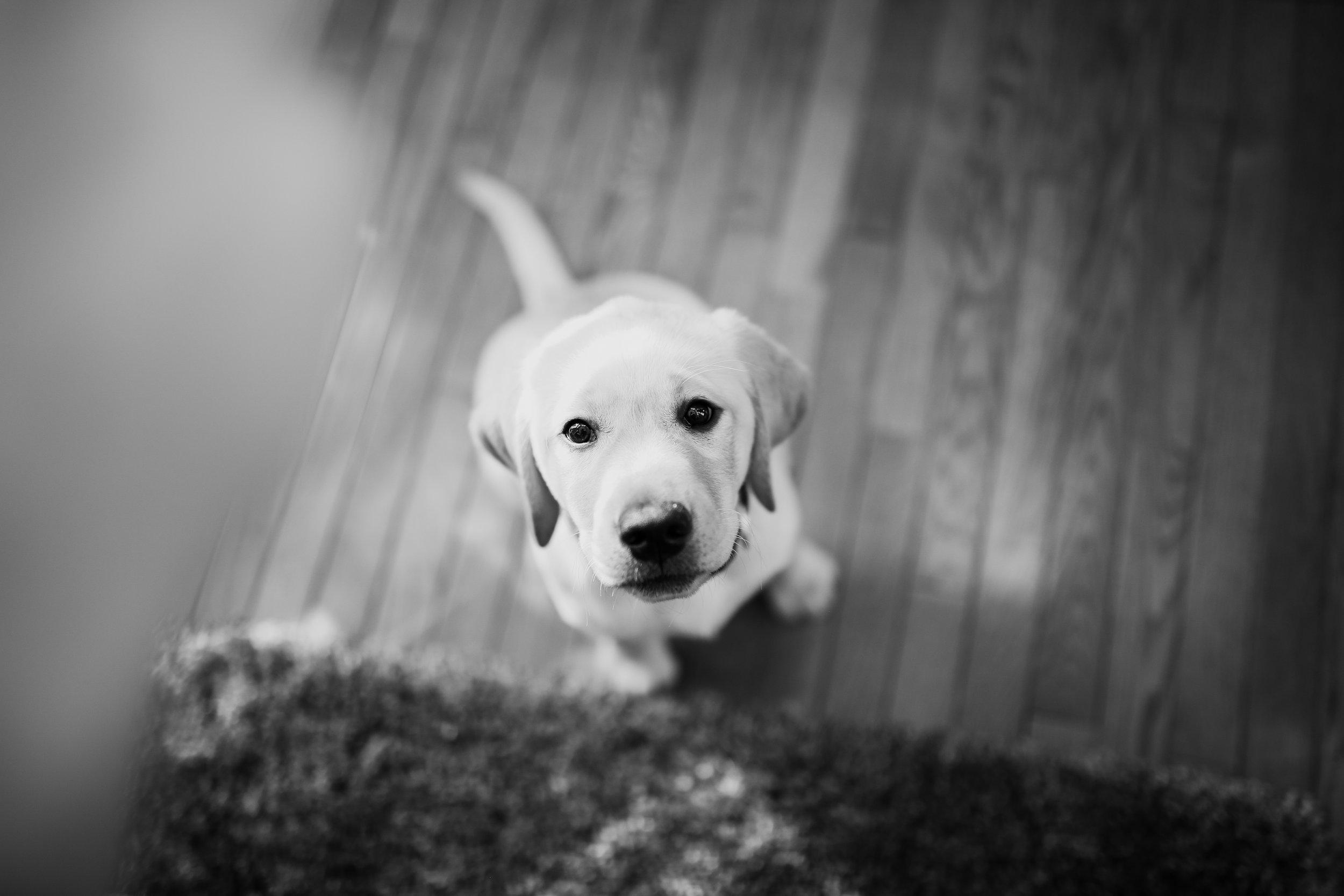 Captain_Puppy_2019-10.jpg
