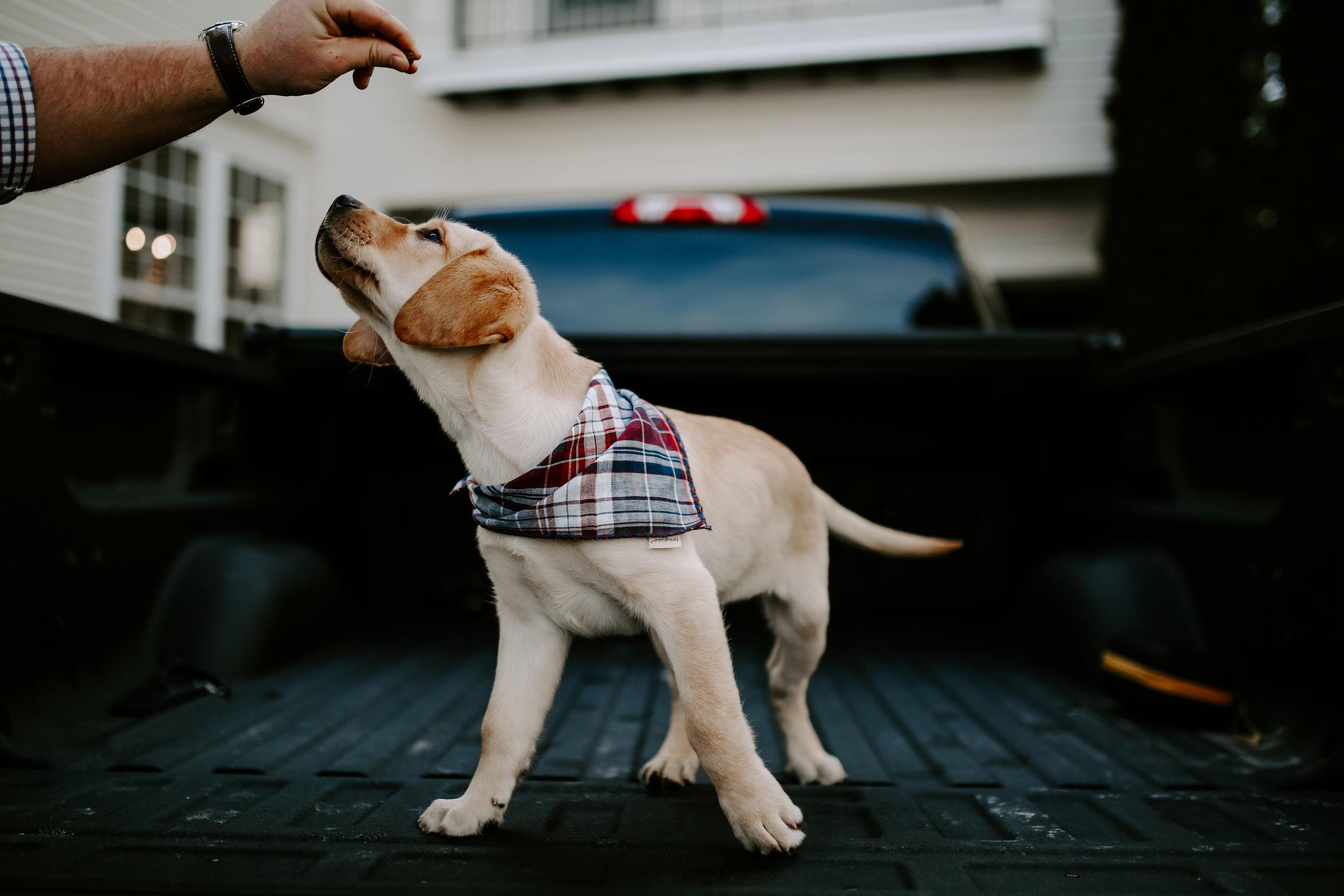 Captain_Puppy_2019-77.jpg