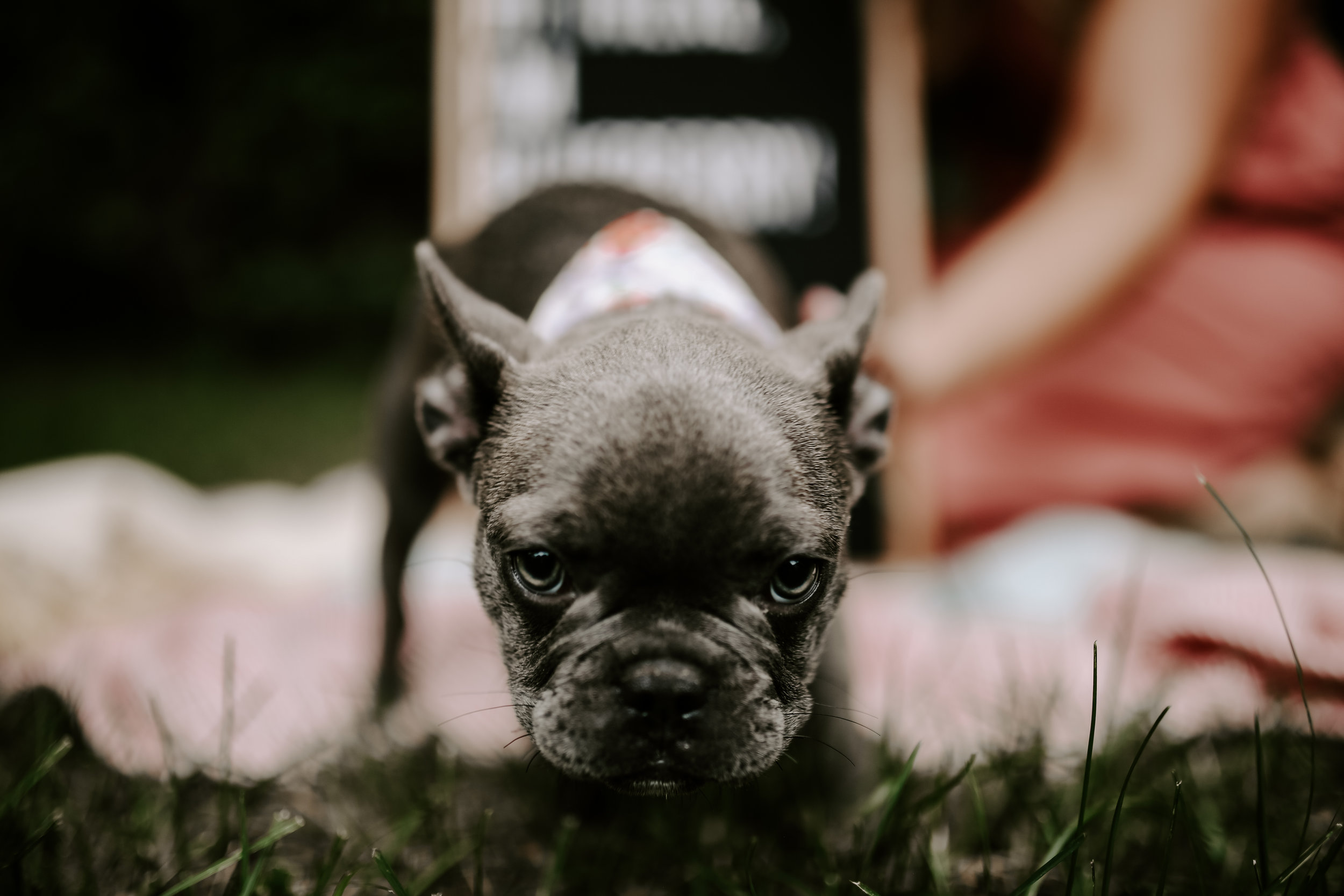 Bluberry|TheFrenchie_2019-3.jpg