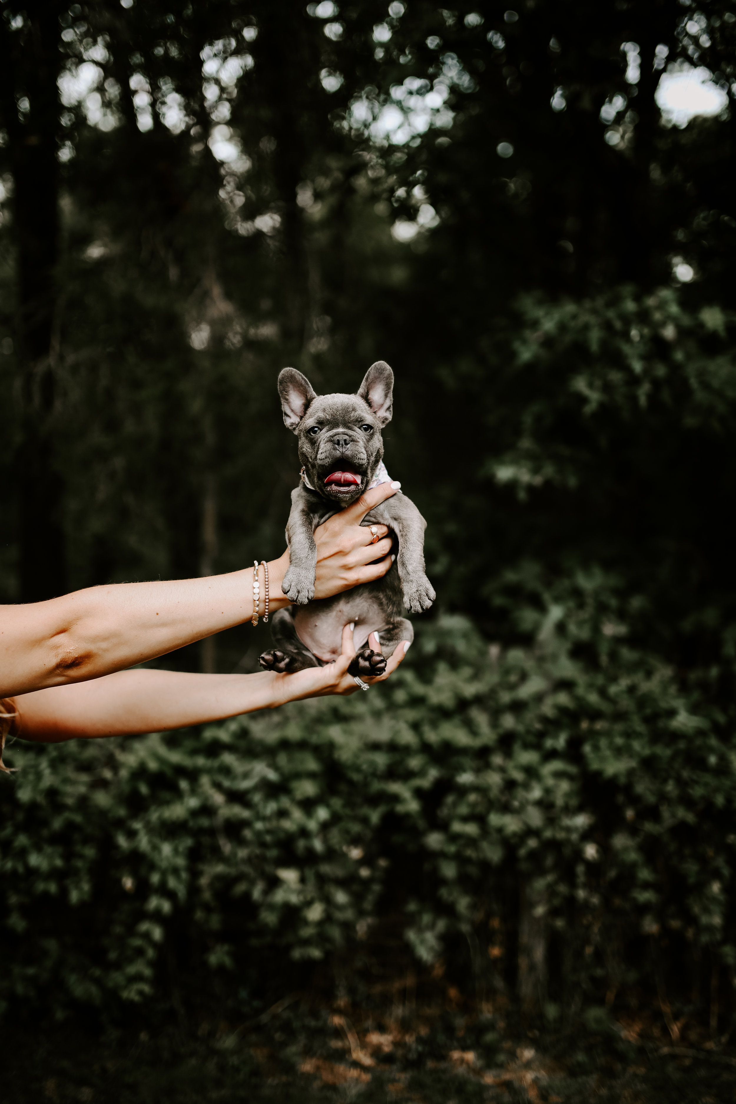 Bluberry|TheFrenchie_2019-38.jpg