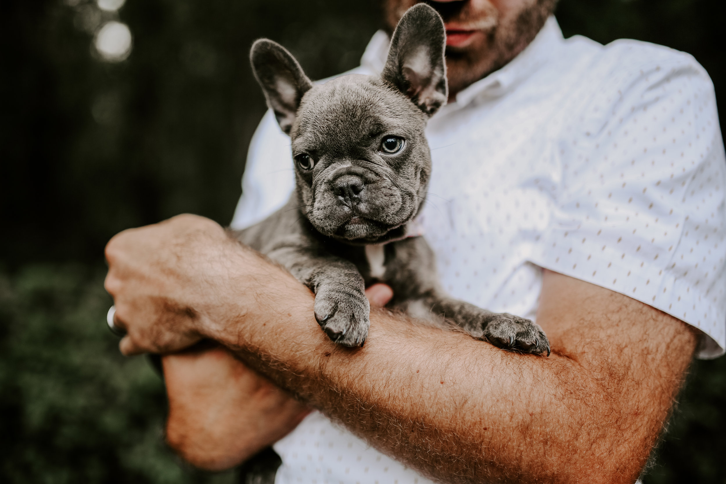 BLUEBERRY |THE FRENCHIE -