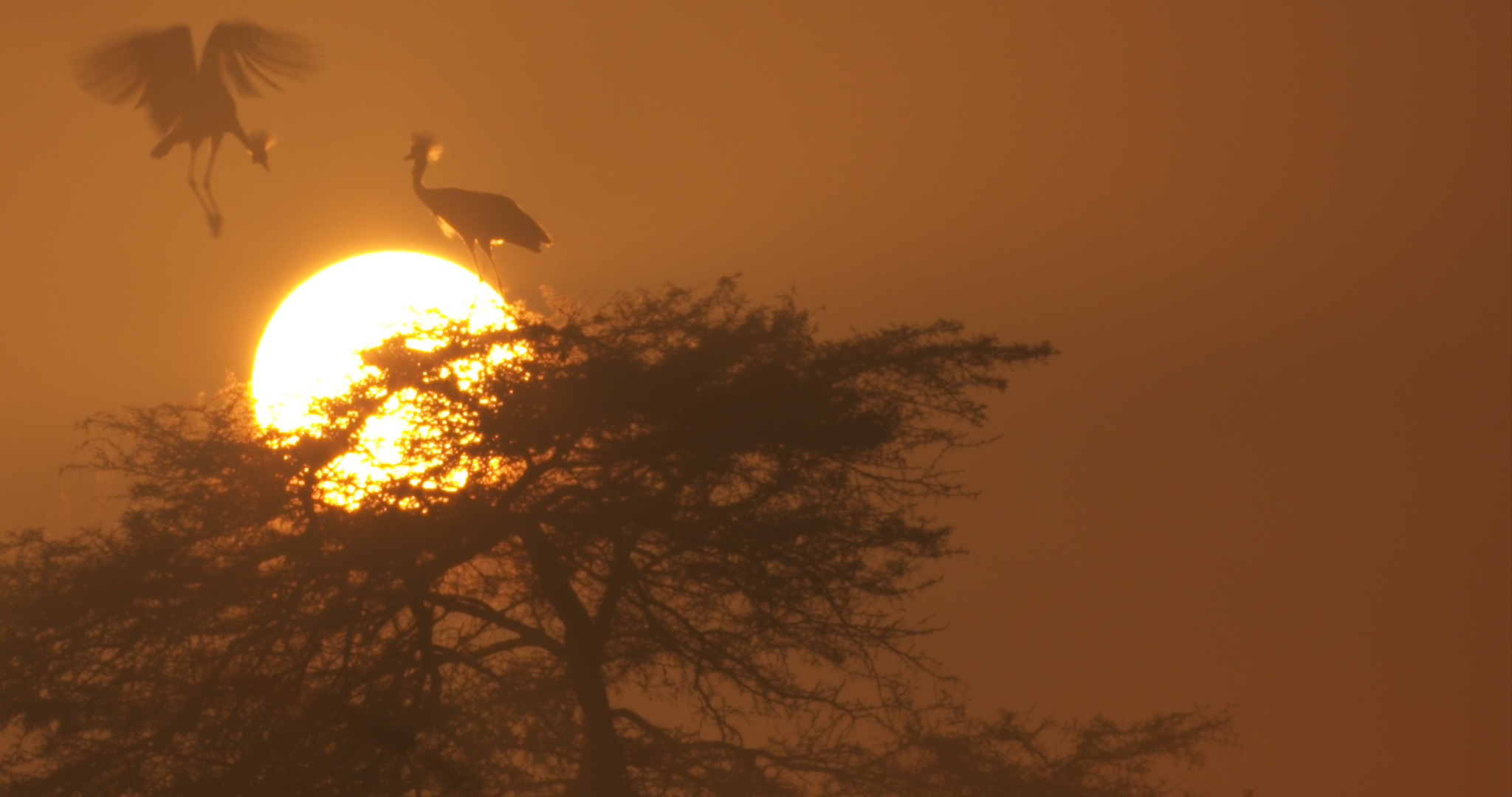 crowned sunrise.jpg