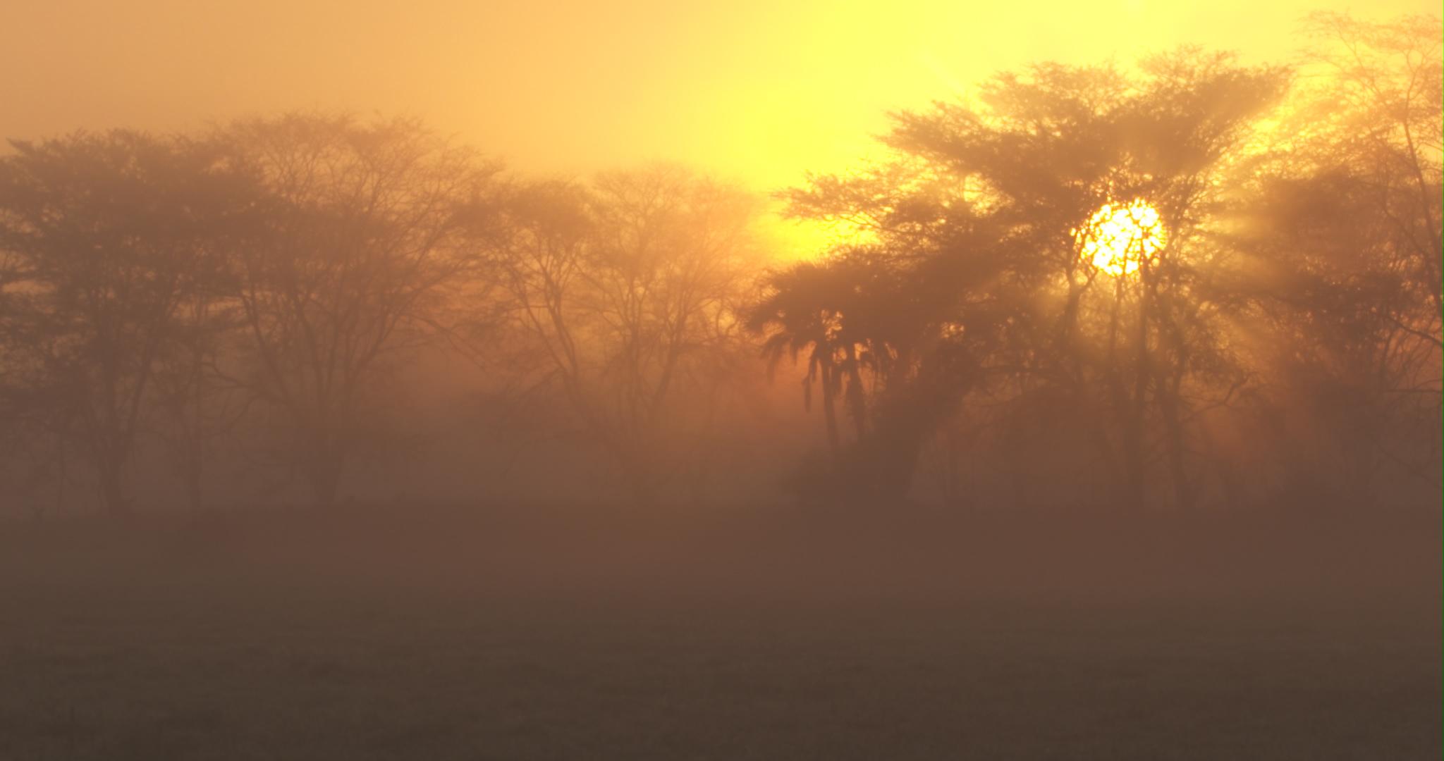 fever tree sunrise.jpg