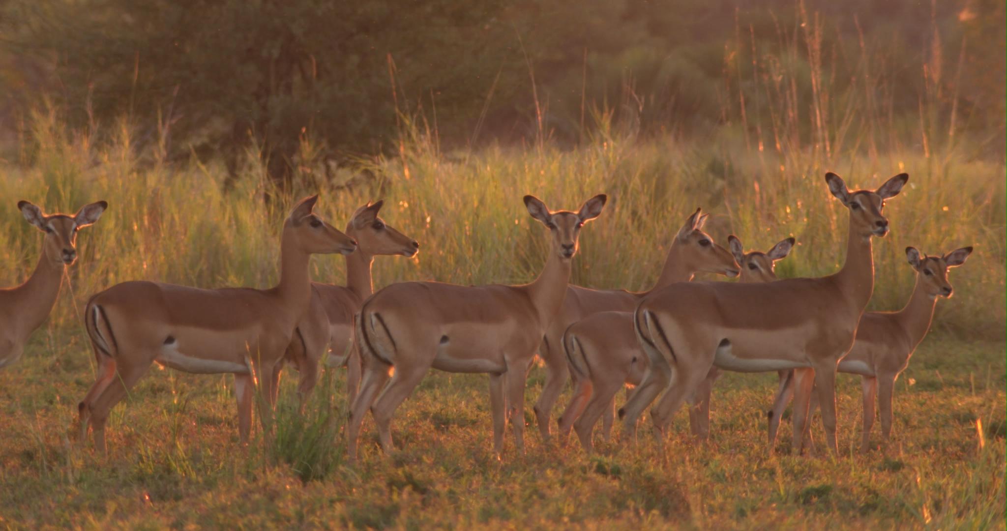 impala in last light.jpg