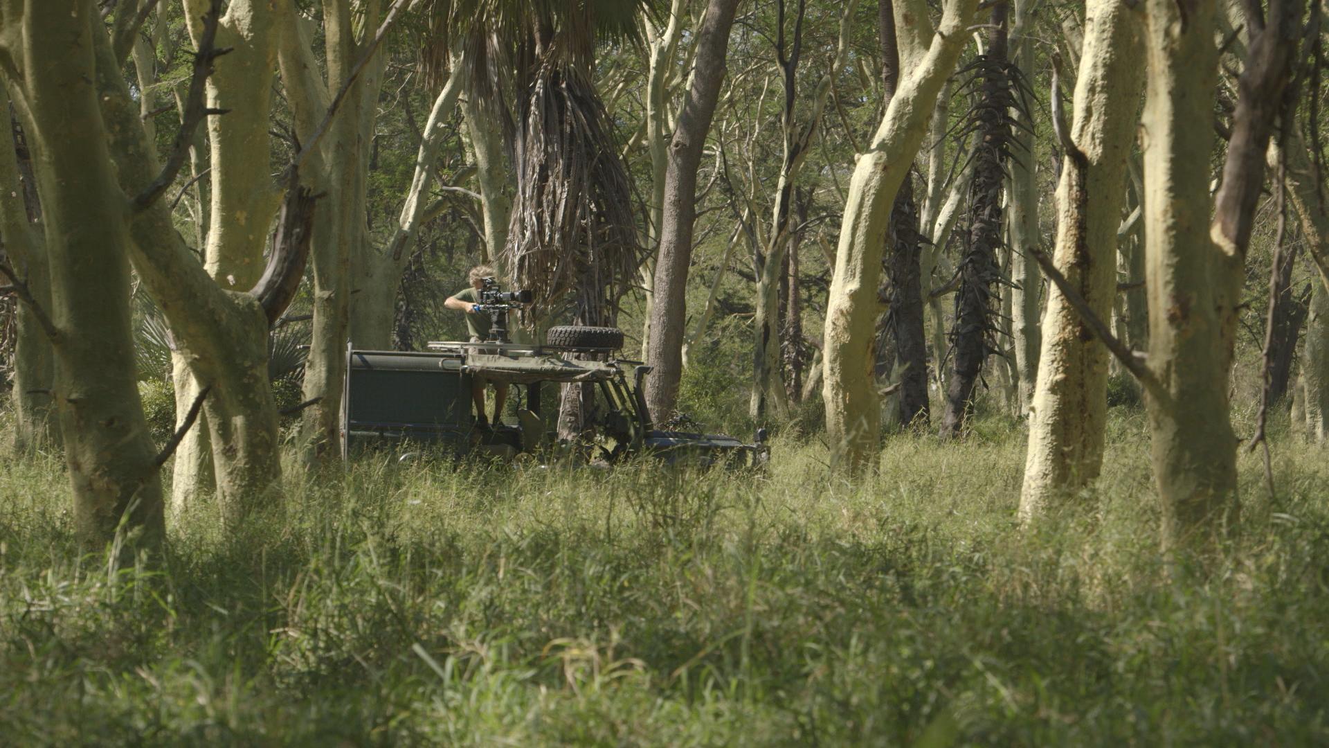 shooting fever trees 2.jpg