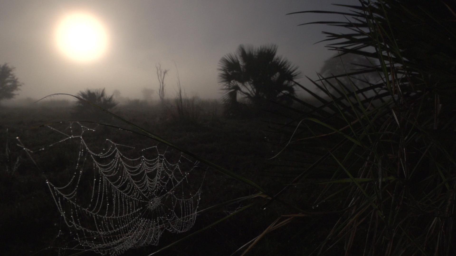 spider web sunrise.jpg