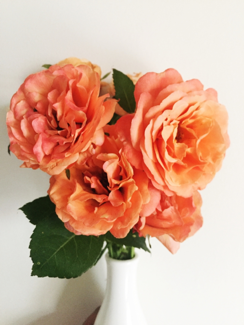 Roses from my own garden