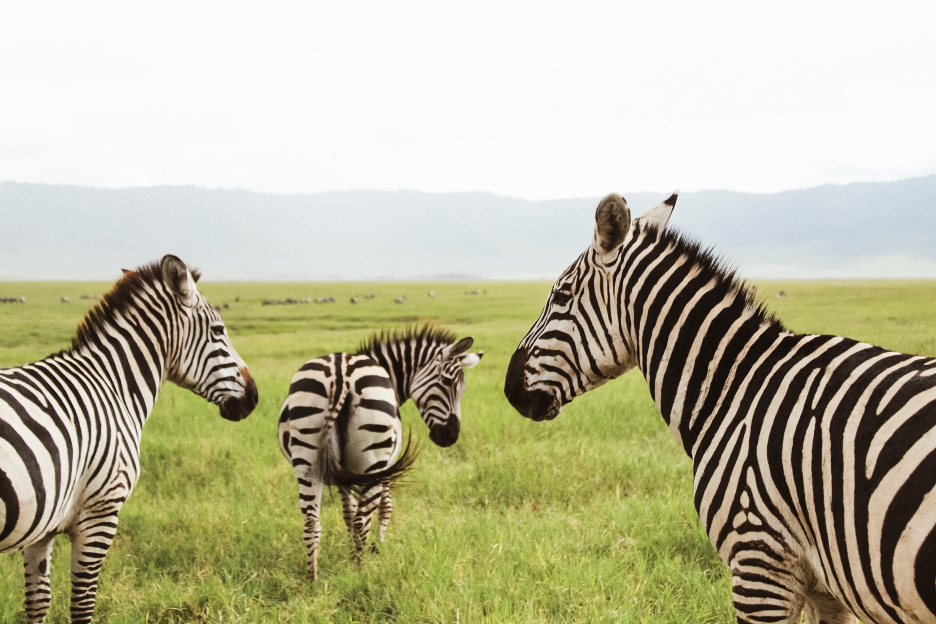 So many zebras everywhere! And they are so beautiful up close.