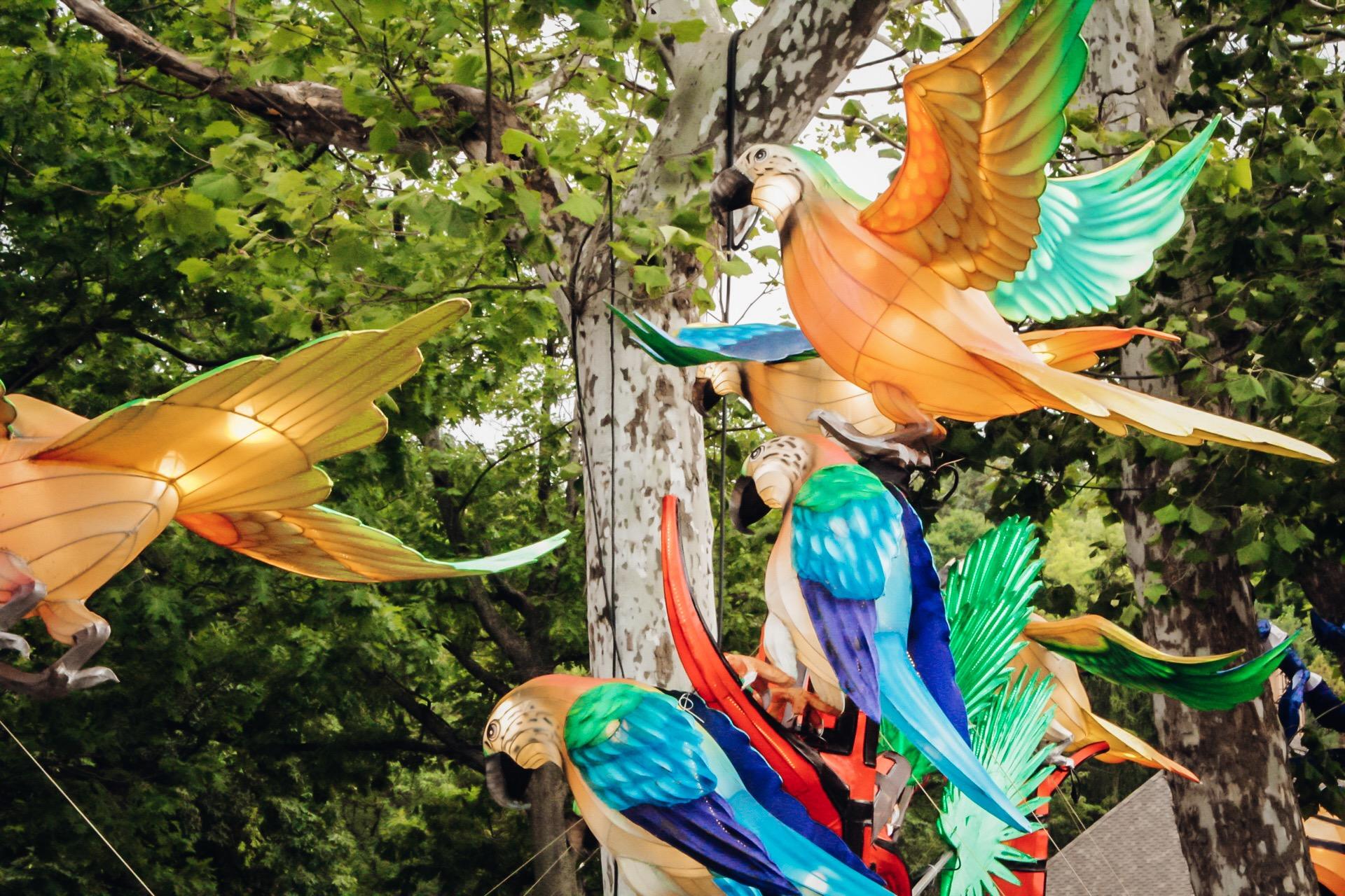 Birds at Asian Lantern Festival Cleveland