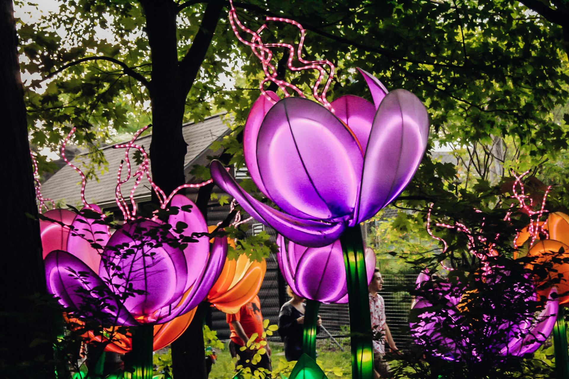 Flowers at Asian Lantern Festival.jpg