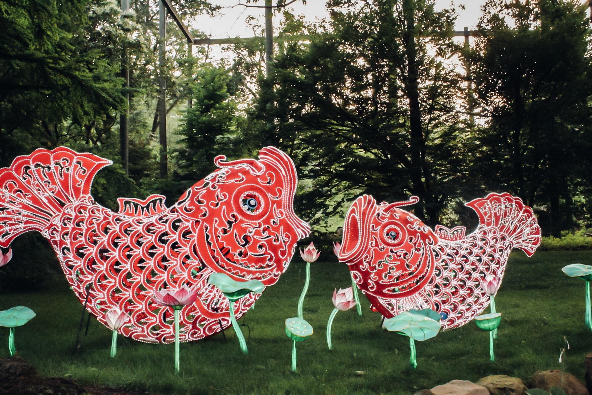 koi fish lanterns cleveland.jpg