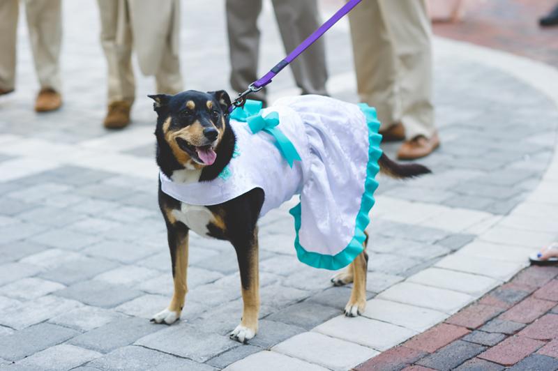 Flower girl dog in wedding - Tradewinds Island Grand Resort beach wedding - st pete beach - Jaime DiOrio Photography - Destination Orlando wedding photographer -  (25).JPG
