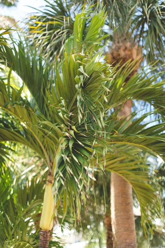 Palm Trees - Tradewinds Island Grand Resort beach wedding - st pete beach - Jaime DiOrio Photography - Destination Orlando wedding photographer -  palm trees at wedding venue.JPG