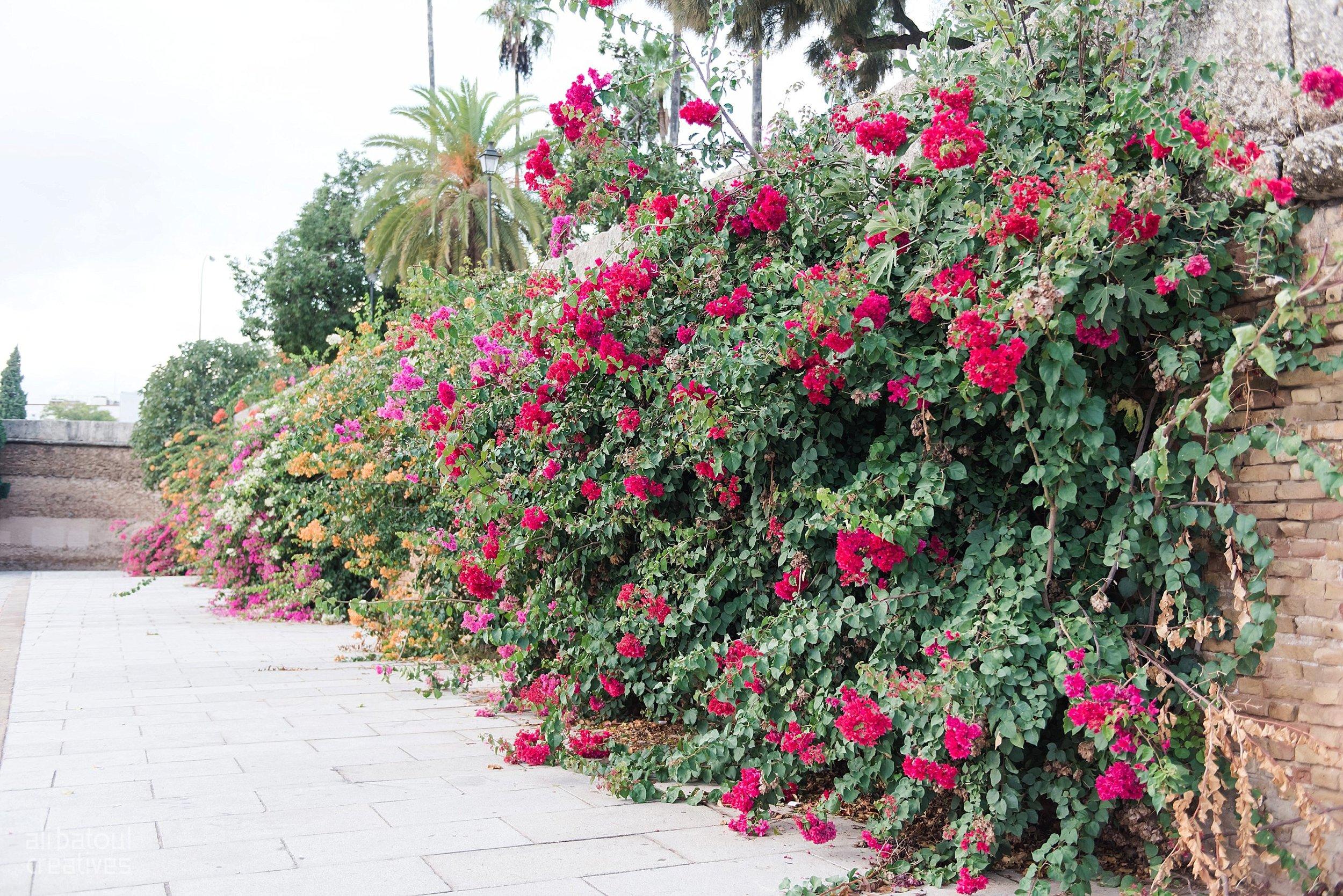 Seville - Ali Batoul Creatives-69_Stomped.jpg