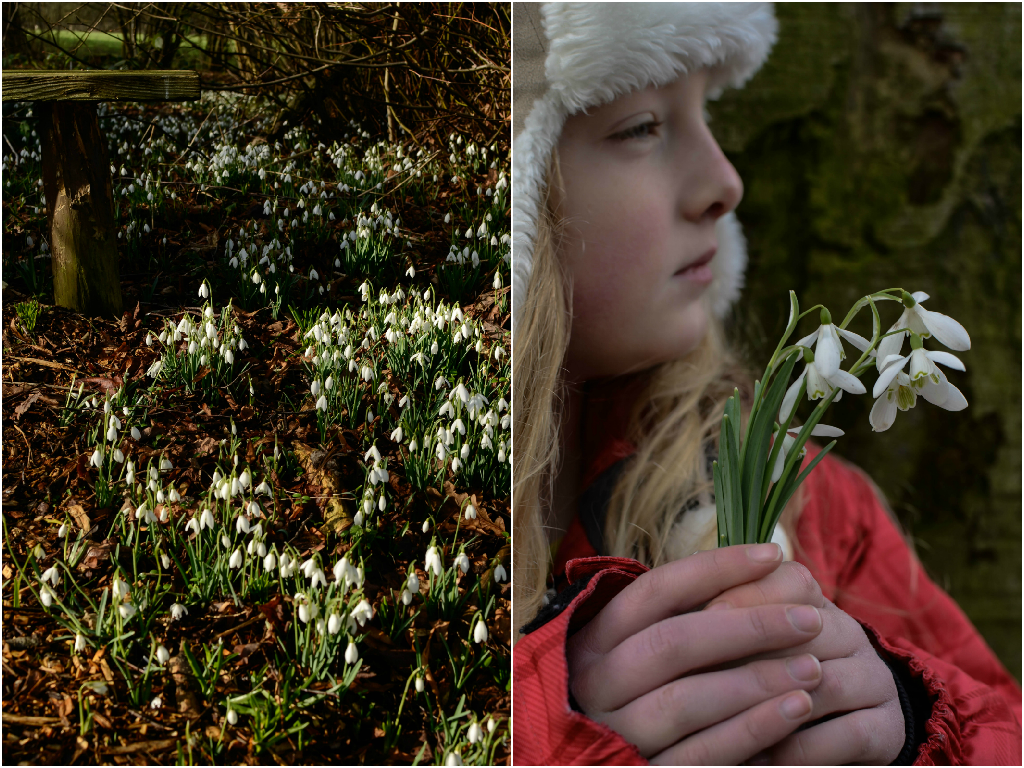 snowdrops.png