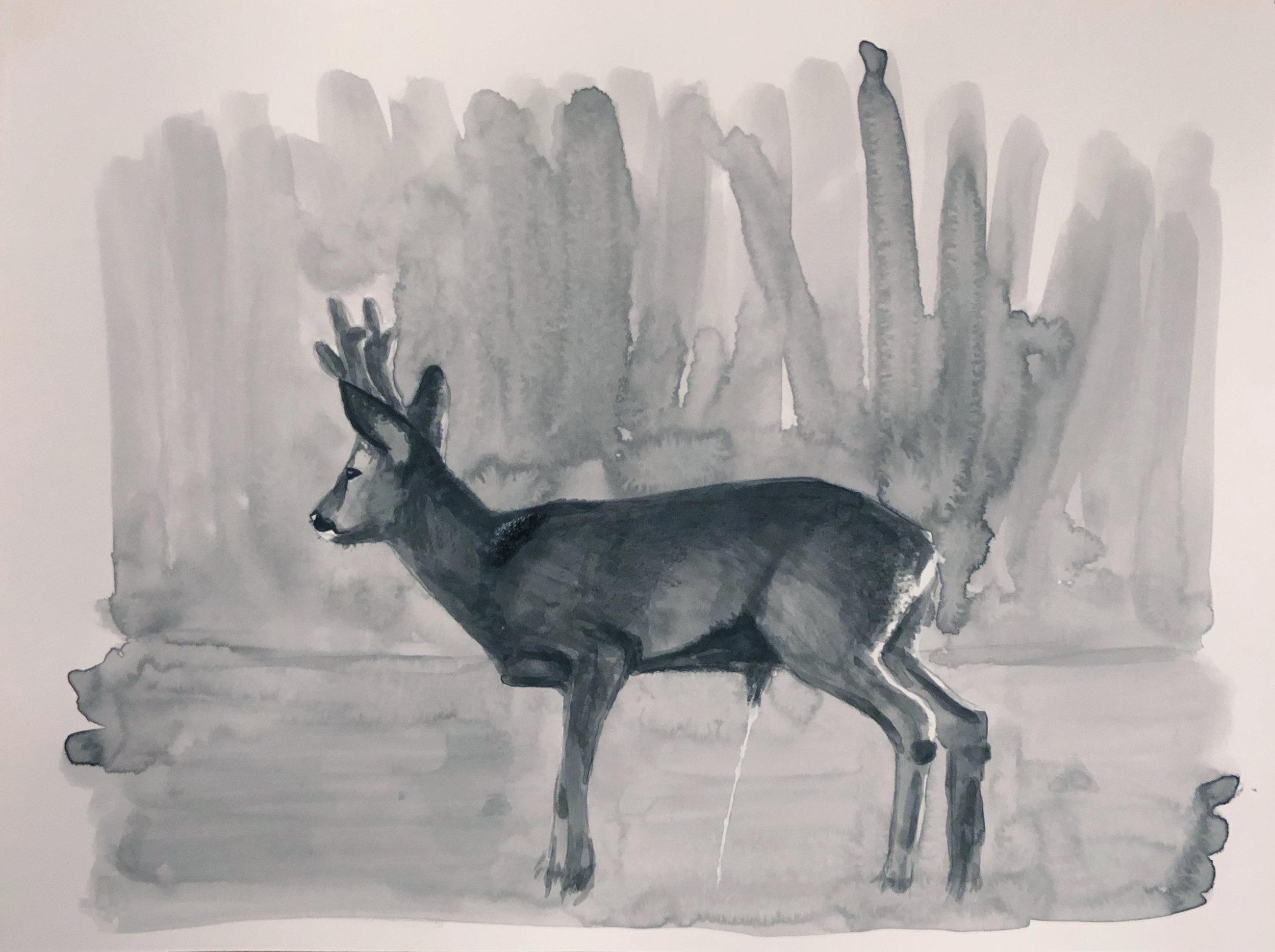 DeerPiss.jpg