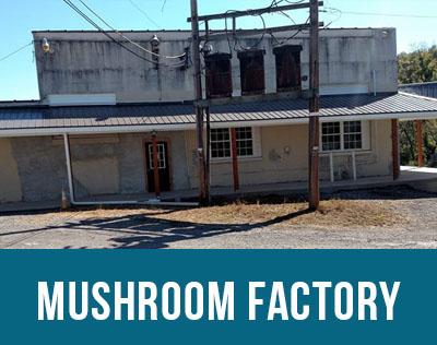 mushroom factory.jpg