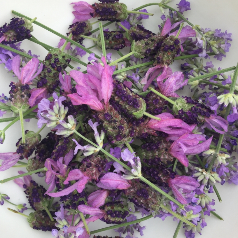 Medicinal Uses: https://wellnessmama.com/7041/lavender-herb-profile/     - Culinary Uses:http://www.bonappetit.com/test-kitchen/how-to/article/cooking-with-lavender