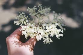 elderflower.jpeg