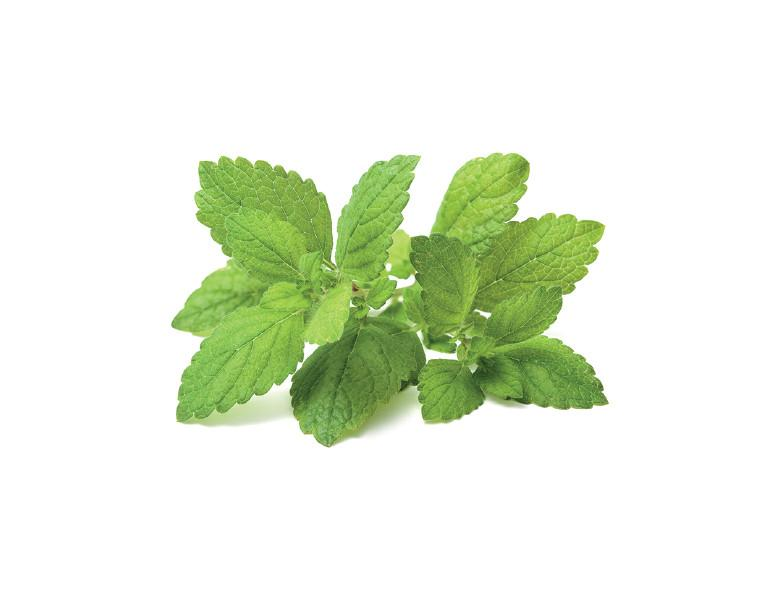 Lemon Balm vinegar extract - This multi-functional herbal vinegar is a lovely reminder of the Spring season to come. Lemon Balm (Melissa officinalis) produces aromatic leaves that are antidepressant, antiviral, lightly sedative and generally lift the mood. Their medicine can aid in alleviating nervous tension, headaches, and upset stomach. Also supports the skin and gut with its carminative and digestive properties (helping the body successfully eliminate foods and gas.) It's light, citrus taste not only makes this vinegar a pleasant daily medicine, but can also be added to culinary recipes as a general healthy ingredient. A general daily dosage if taken directly under the tongue (or diluted in water) would be 2 dropperfuls, 2x daily. If adding to your favorite Spring salad dressings or marinades, use as you would any culinary vinegar. Use this medicine to help balance out pesky tension or round out a delicious home cooked meal. The fresh Lemon Balm leaves used in this extraction are straight from the Terra Luna garden :-)