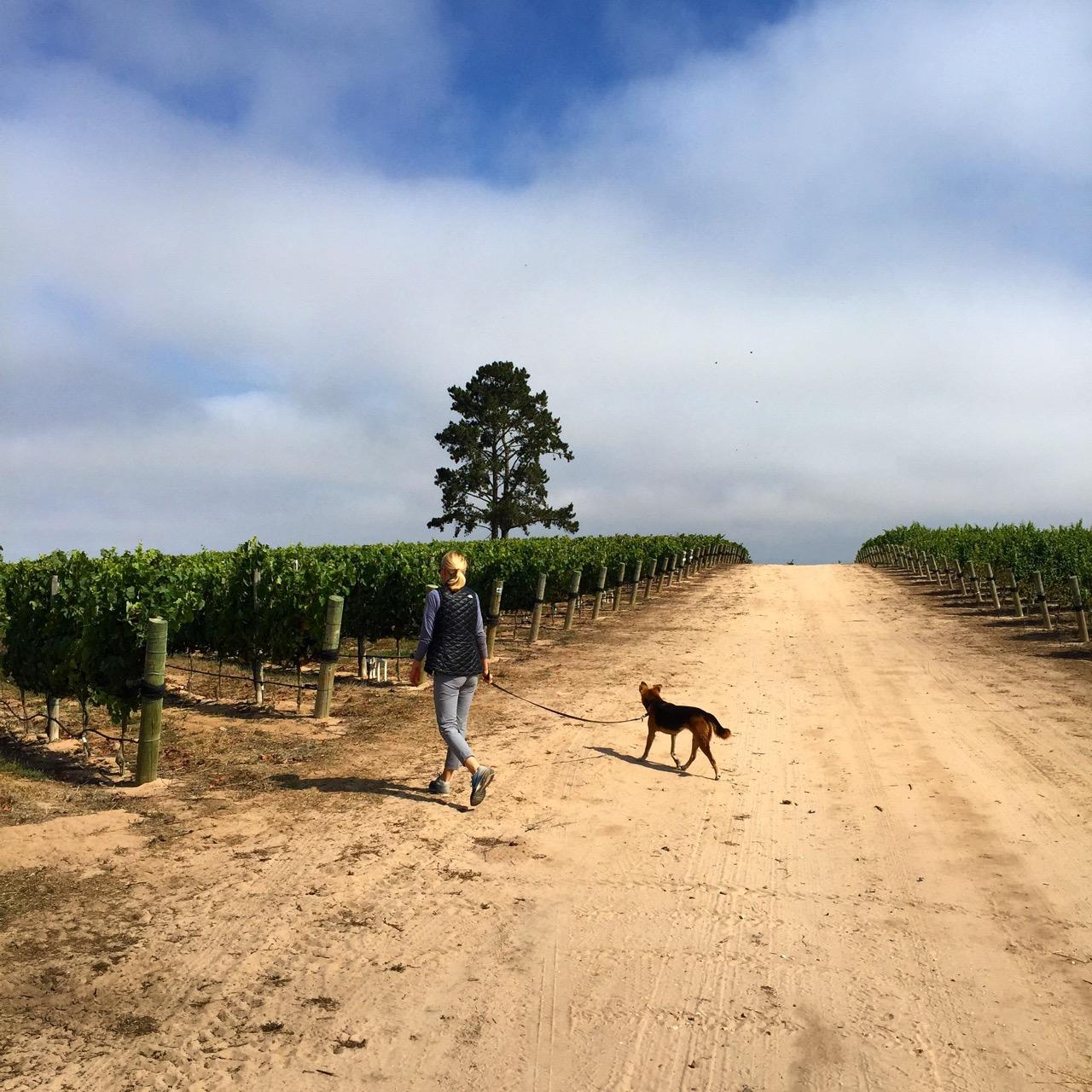 Amy & Bubbles at Presqu'ile Vineyard