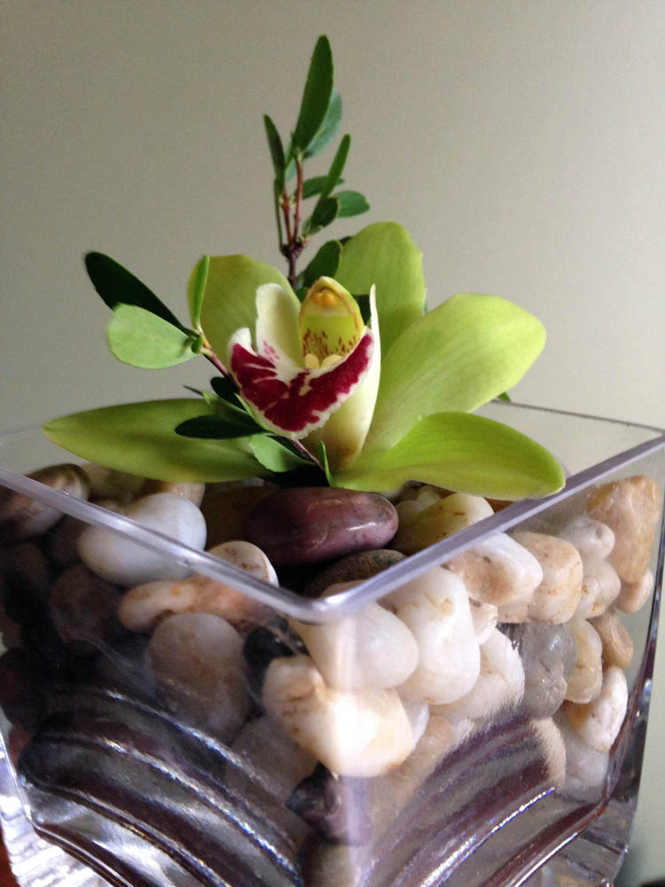 Single orchid in square glass vase with rocks.