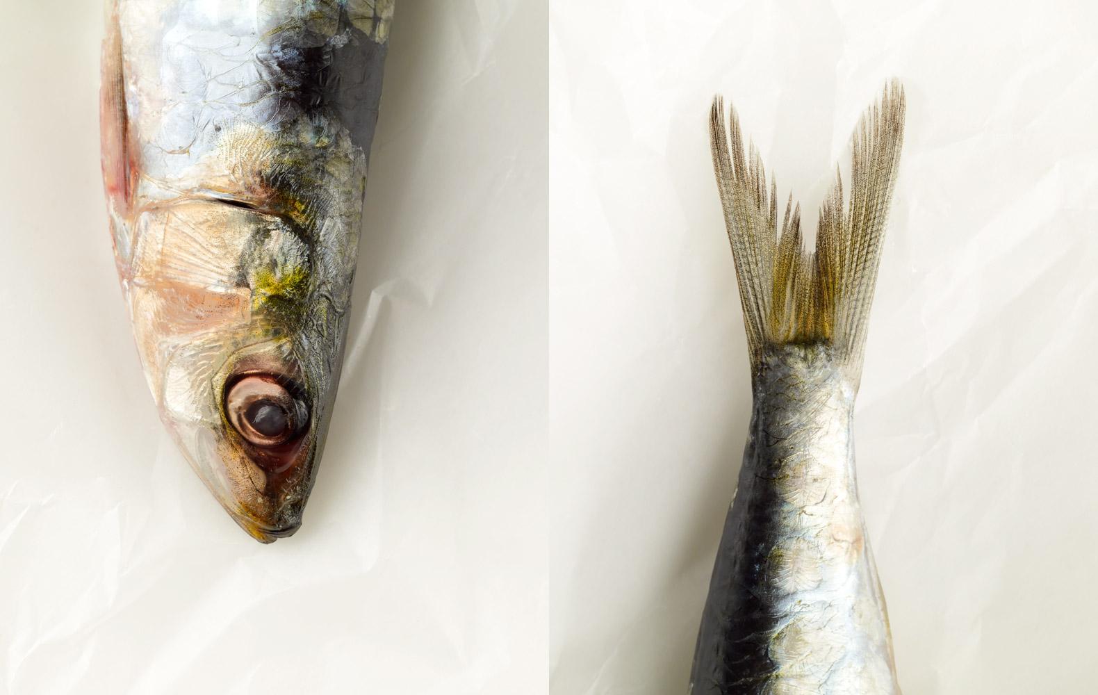 E_24-81_081030-Sardines-on-Marble-0049.jpg