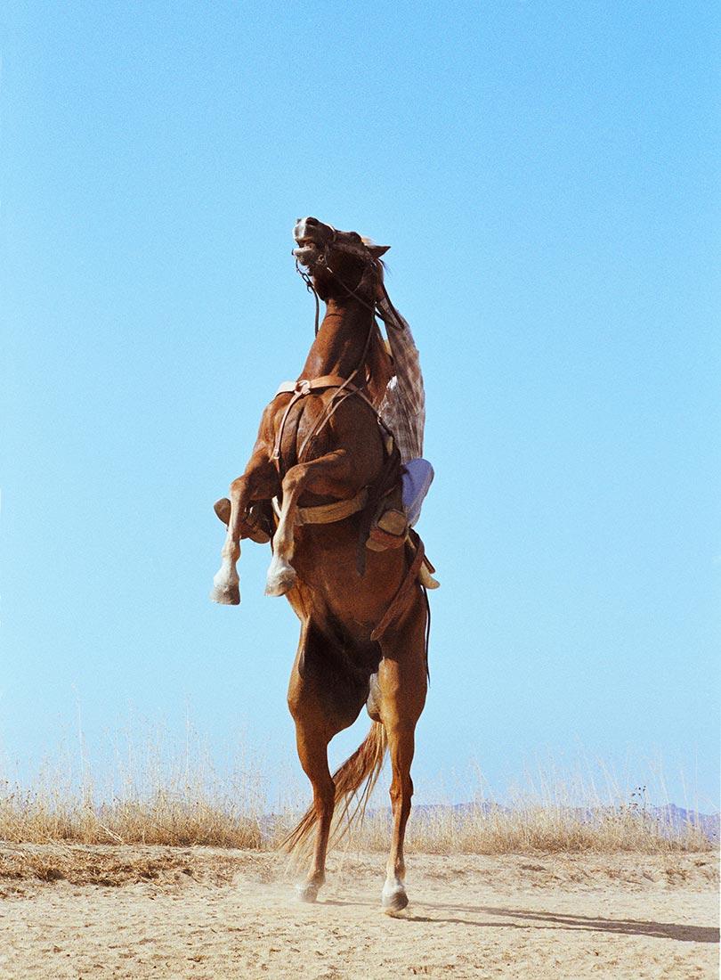 Blue-Horse-Web.jpg