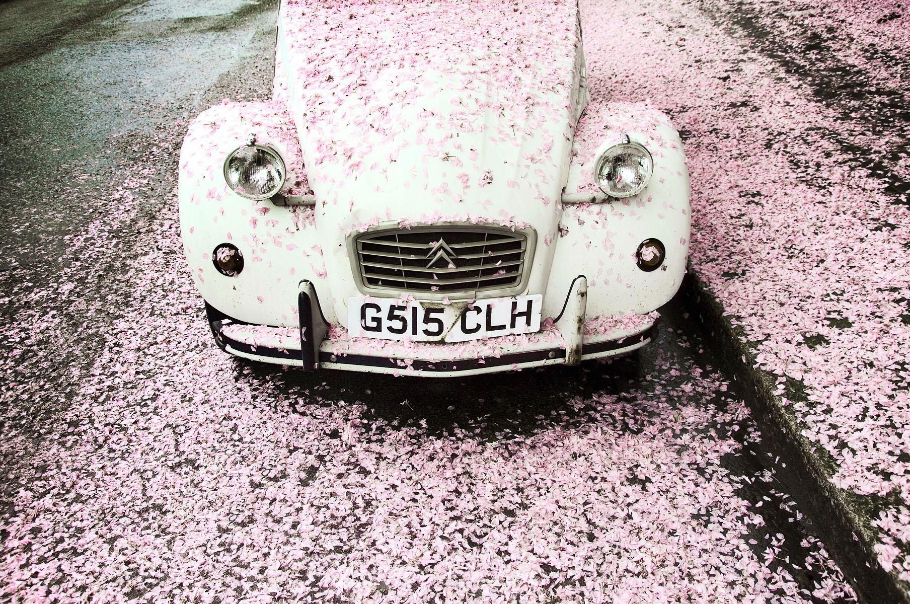 citroen_car_blossom01.jpg