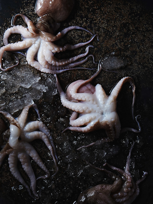 Octopuses.jpg