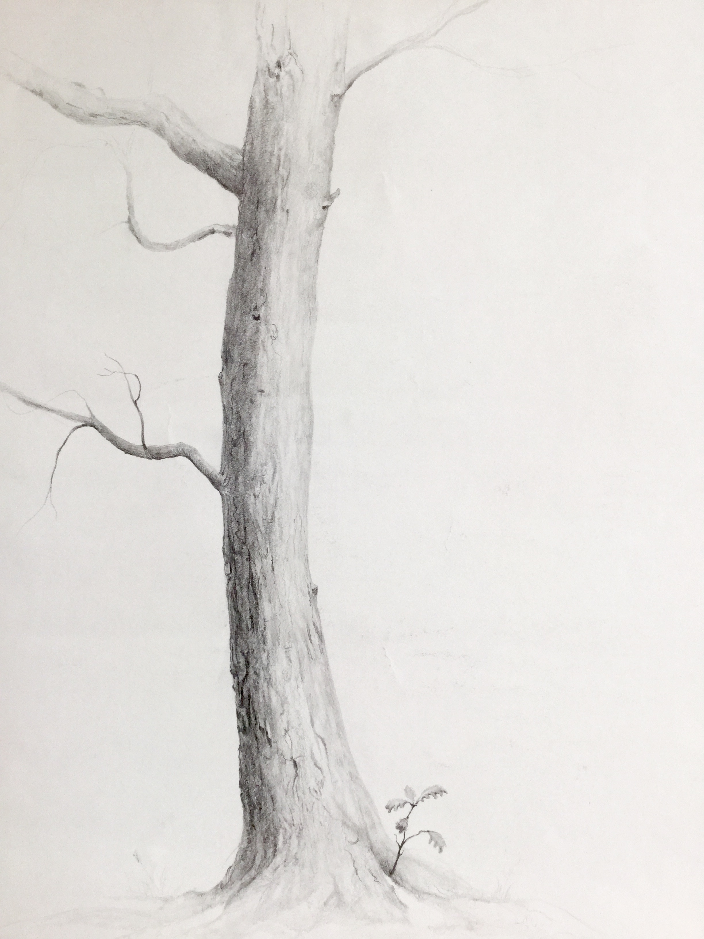 "Drawing by Irina, Griphite ondrawing paper. 11""x17"""