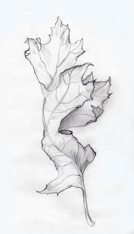 drawing-botanical-rendering-leaf.jpg