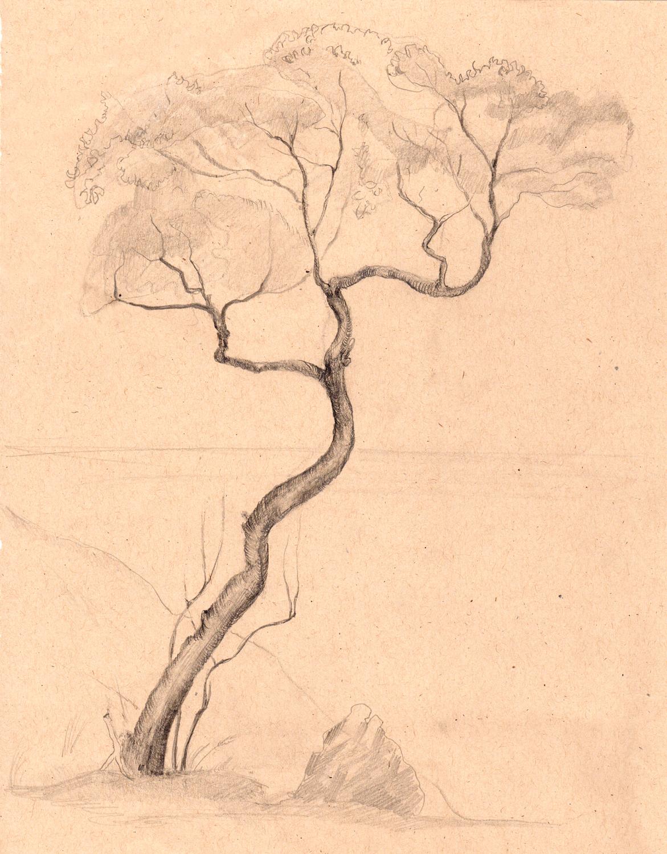 drawing-sketch-tree.jpg