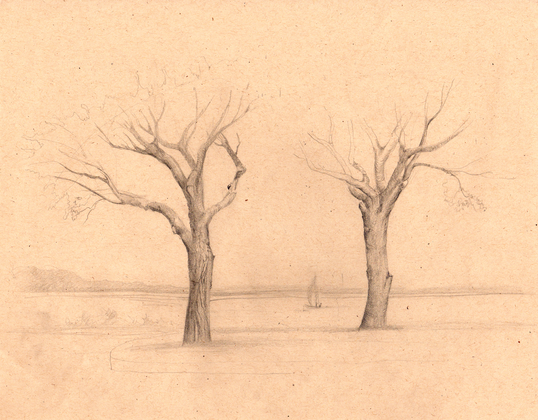 drawing-trees-sandy-hook-sketch.jpg