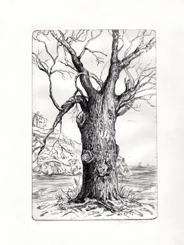 etching-copper-plate-tree.jpg