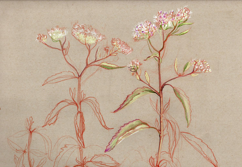 Flowers original scan.jpg