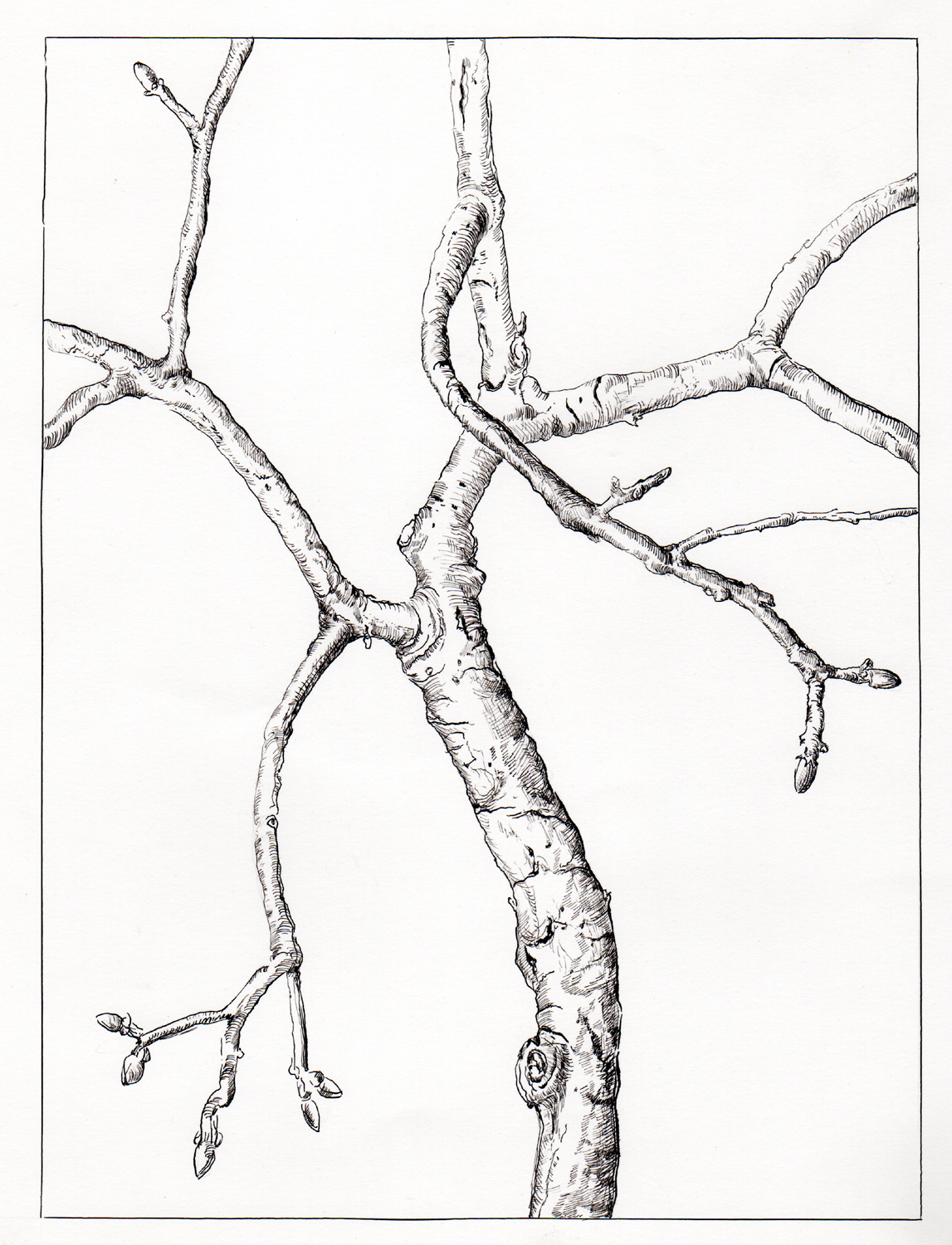 ink-drawing-branches.jpg