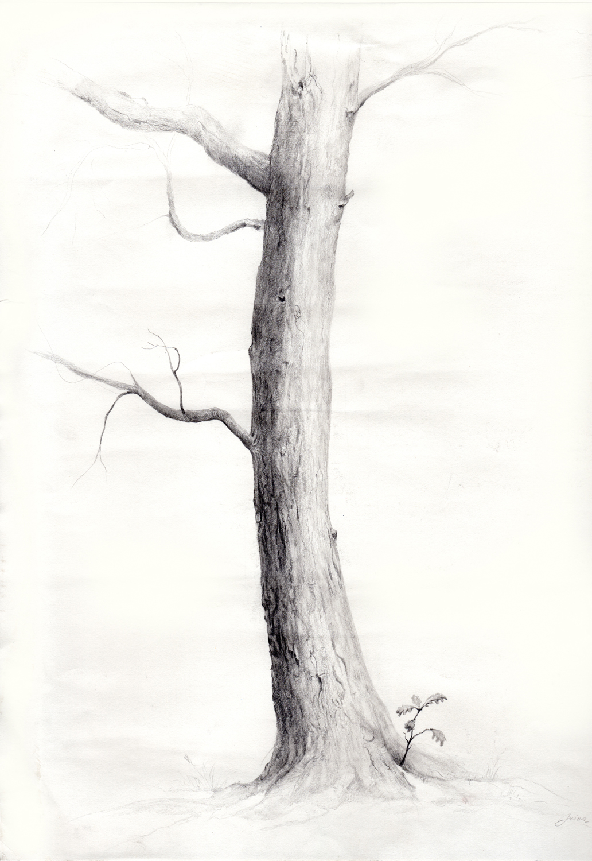 oak tree scan.jpg