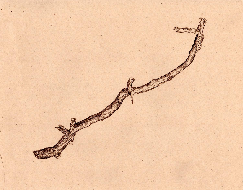 ink-drawing-dry-branch.jpg