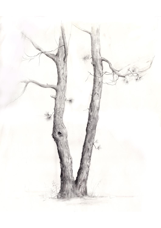 pine trees scan.jpg