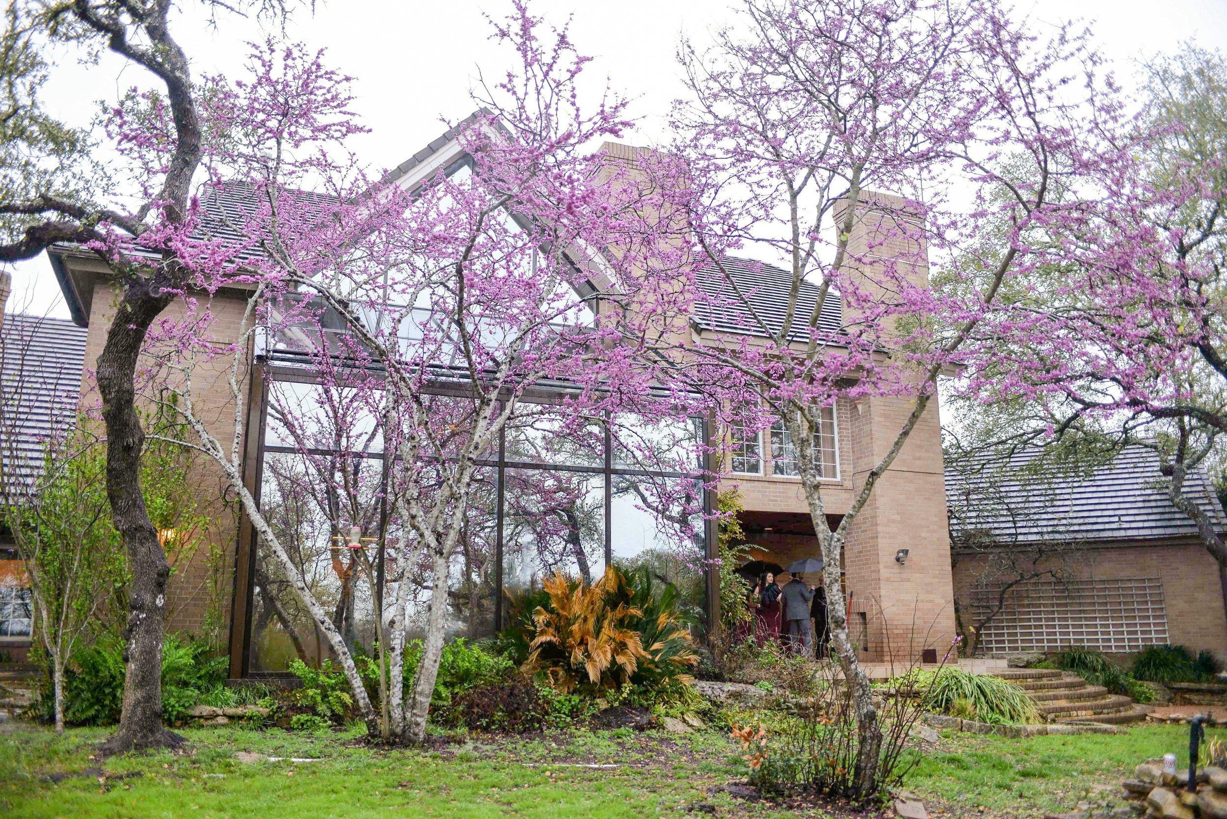 bh tree blooming.jpg